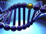 immagine rappresentativa della notizia Alcol in adolescenza e alterazioni genetiche che perdurano anche nell'età adulta