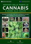 Varianti delle piante di cannabis e danni alla salute. Rassegna iconografica sulle nuove tipologie di cannabis e delle modalità di coltivazione intensiva